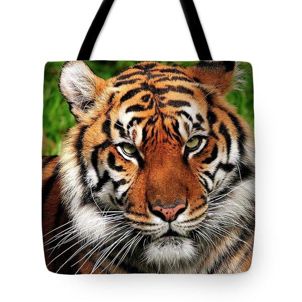 Sumatran Tiger Portrait Tote Bag