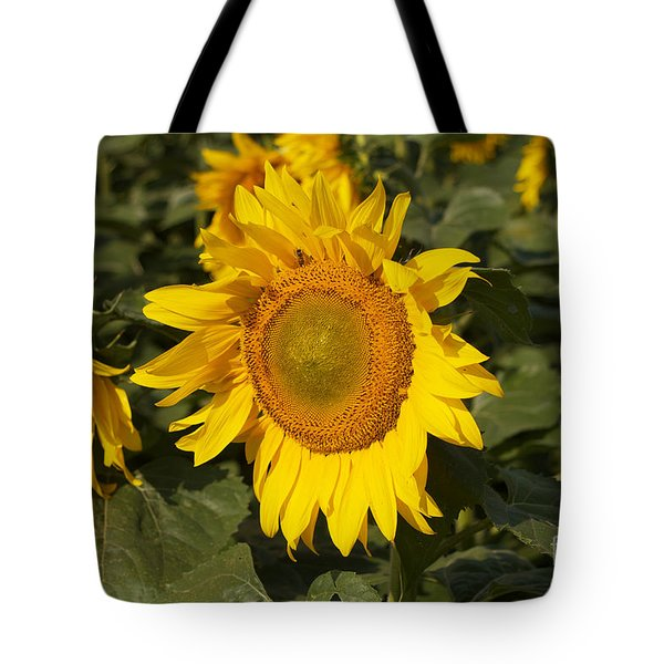 Tote Bag featuring the photograph Sun Flower by William Norton