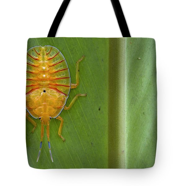 Tessaratomid Nymph Papua New Guinea Tote Bag by Piotr Naskrecki