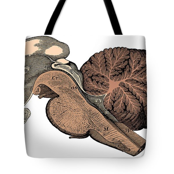 Third And Fourth Ventricles Of The Brain Tote Bag