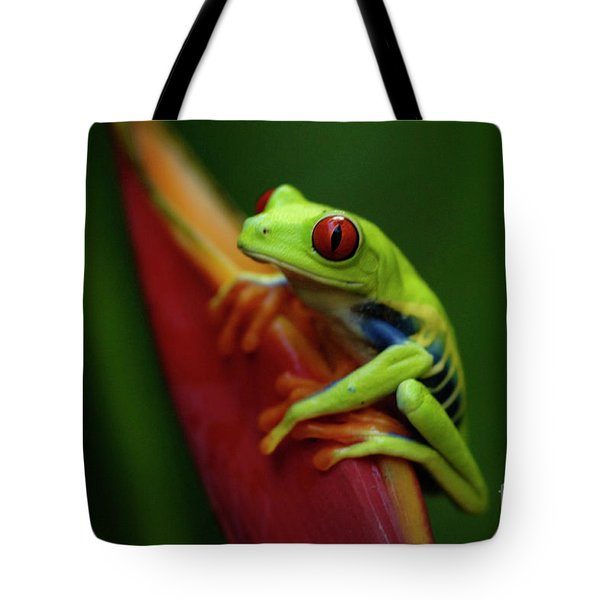 Tree Frog 19 Tote Bag by Bob Christopher