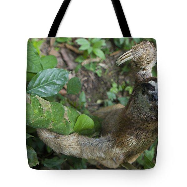 Brown-throated Three-toed Sloth Tote Bag by Suzi Eszterhas