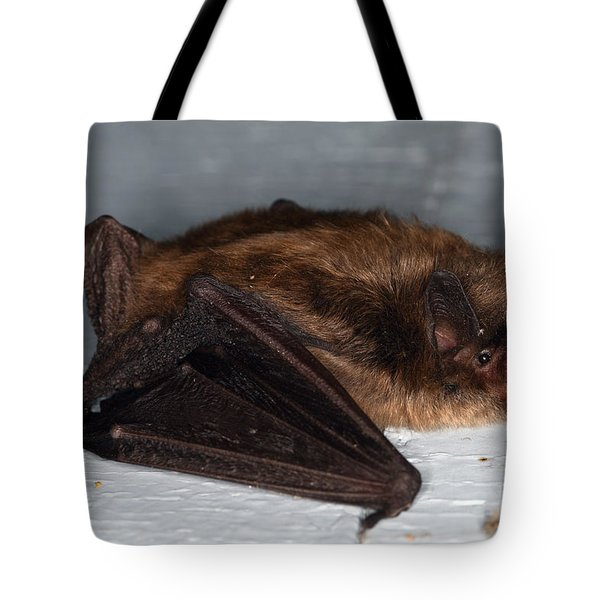 Little Brown Bat Tote Bag by Ted Kinsman