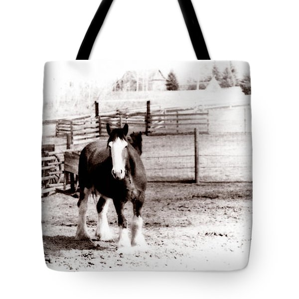 1900  Clydesdale Horse Tote Bag by Marcin and Dawid Witukiewicz