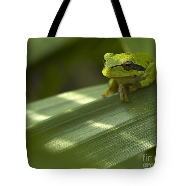 Tree Frog Tote Bag by Odon Czintos