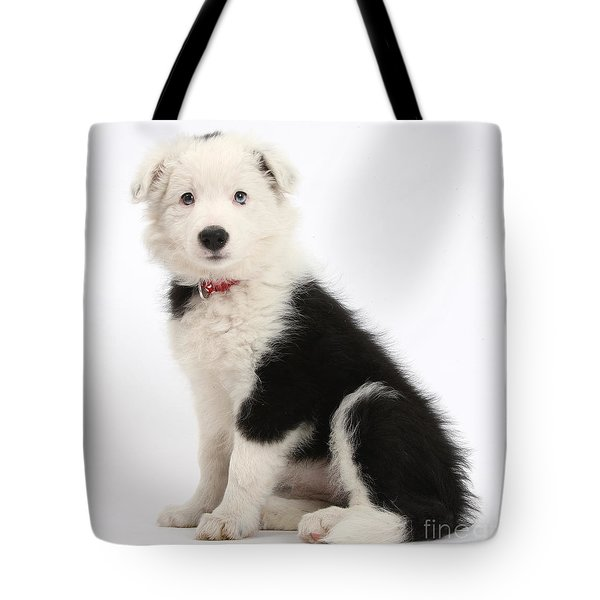 Border Collie Pup Tote Bag by Mark Taylor