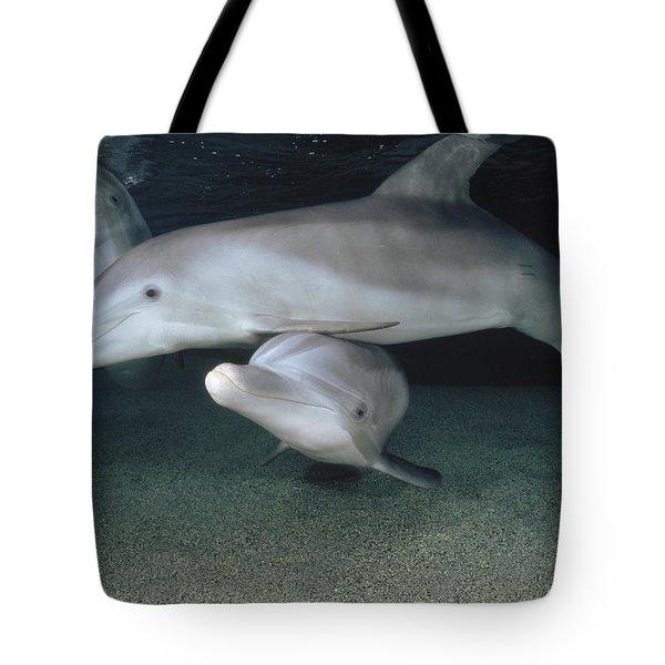 Bottlenose Dolphin Underwater Trio Tote Bag by Flip Nicklin