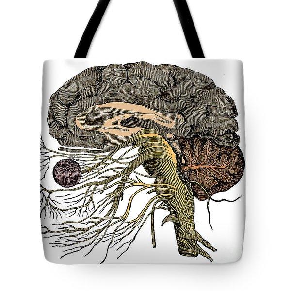 Brain And Cranial Nerves Tote Bag