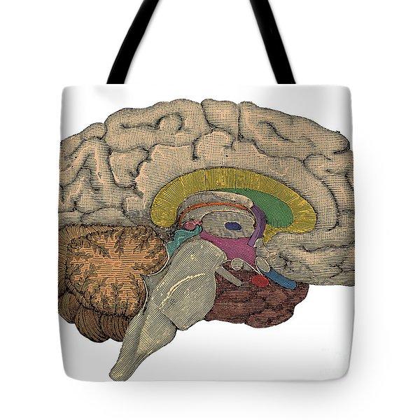Brain Cross-section Tote Bag