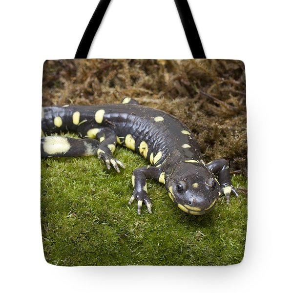 California Tiger Salamander  Monterey Tote Bag