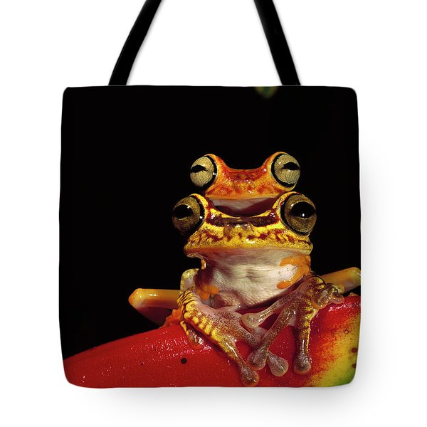 Chachi Tree Frog Hyla Picturata Pair Tote Bag by Pete Oxford