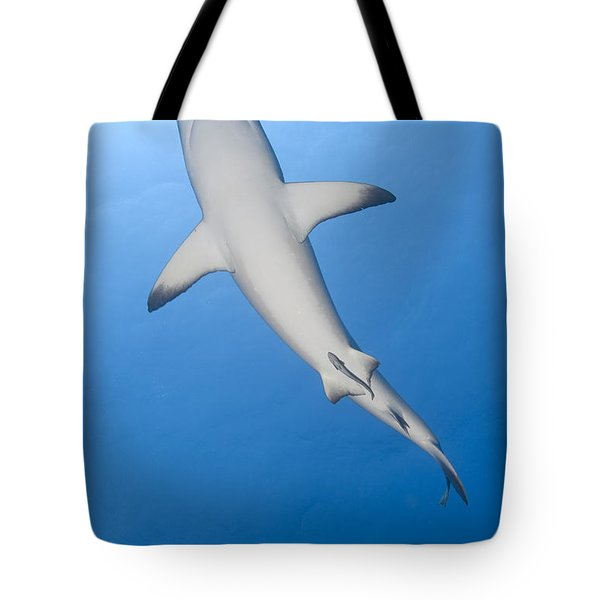 Gray Reef Shark With Remora, Papua New Tote Bag by Steve Jones
