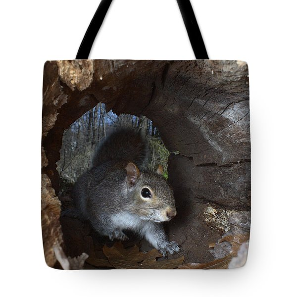 Gray Squirrel Tote Bag by Ted Kinsman