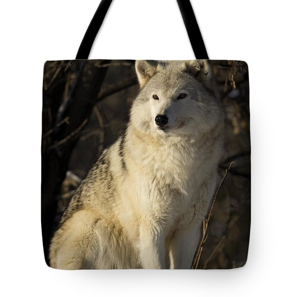 Grey Wolf Canis Lupus In Ecomuseum Zoo Photograph By