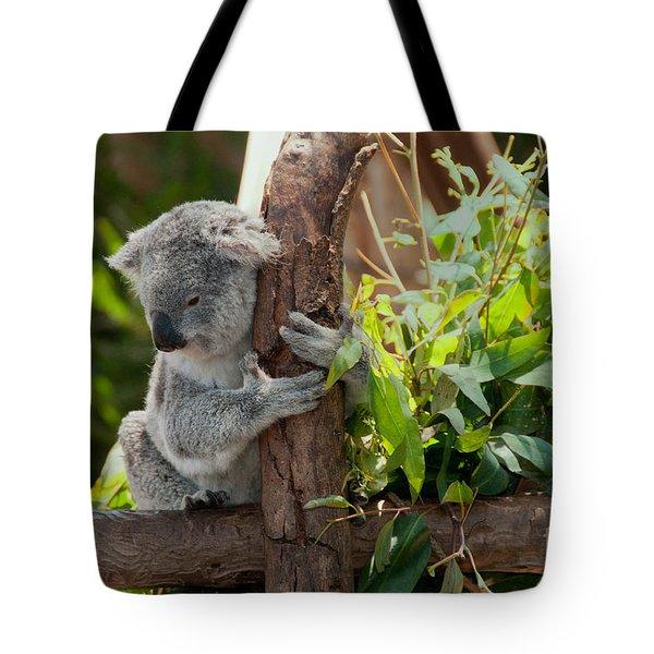 Koala Tote Bag by Carol Ailles