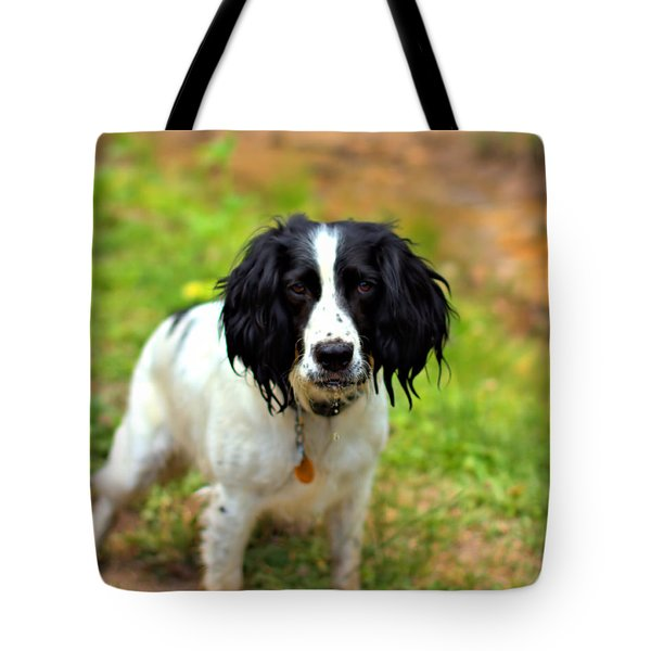 Spaniel Tote Bag by Marlo Horne