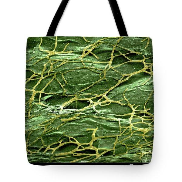 Staghorn Fern, Sem Tote Bag by Ted Kinsman