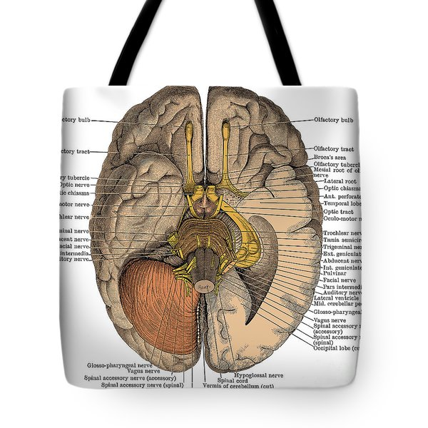 Undersurface Of The Brain Tote Bag
