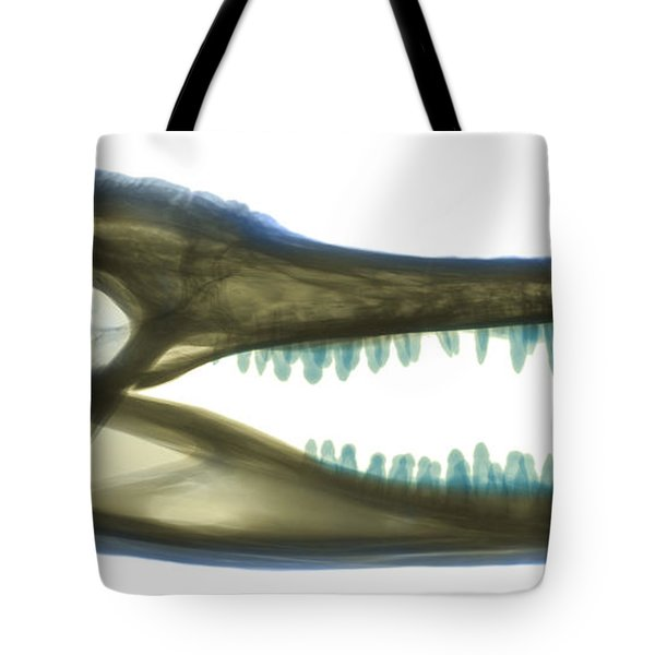 X-ray Of American Alligator Tote Bag by Ted Kinsman