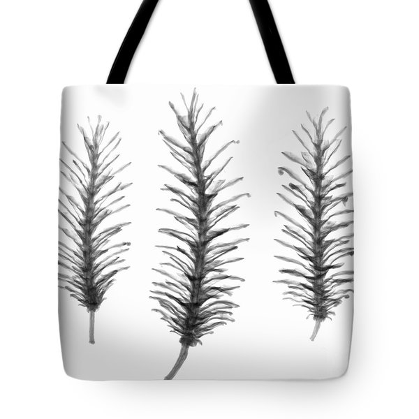 X-ray Of Pine Cones Tote Bag by Ted Kinsman