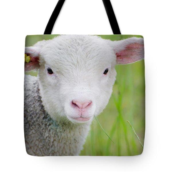 Young Sheep Tote Bag
