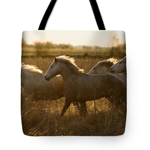 Camargue Horse Equus Caballus Group Tote Bag by Konrad Wothe
