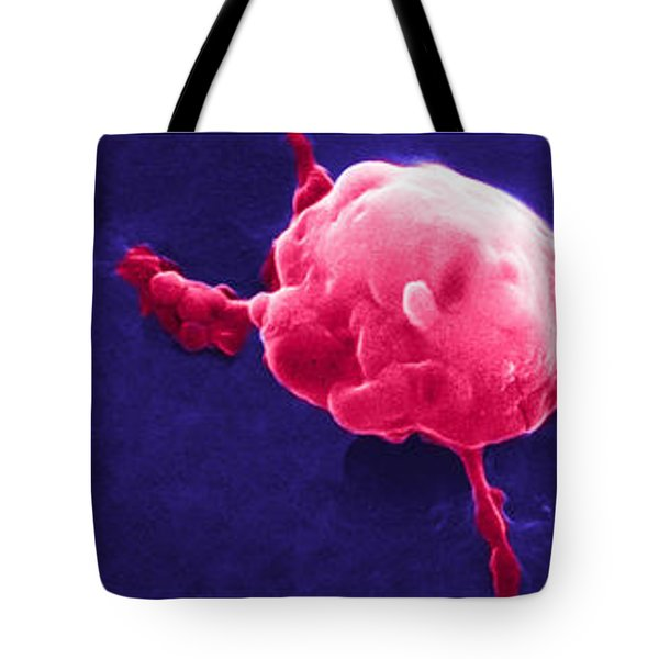 Cancer Cell Death Sequence, Sem Tote Bag by Science Source