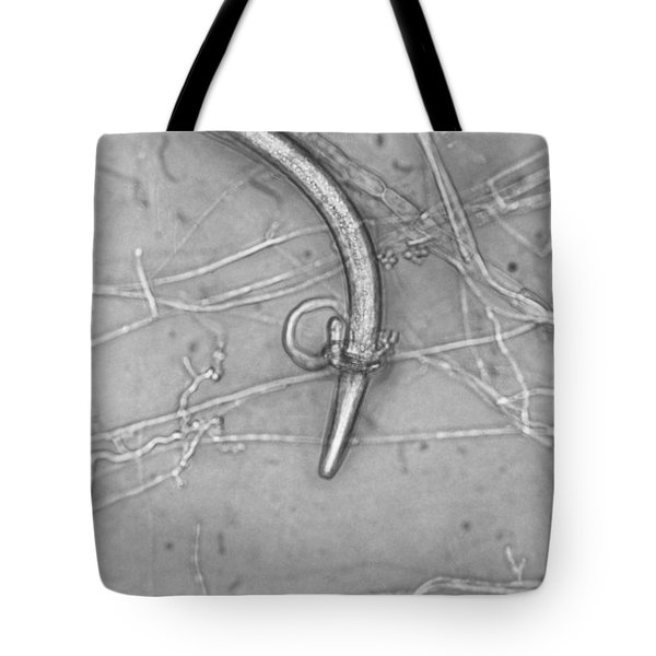 Nematode Snared By Predatory Fungus Lm Tote Bag by Photo Researchers, Inc.