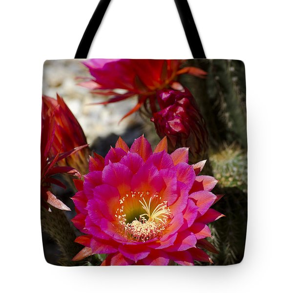 Pink Cactus Flowers Tote Bag