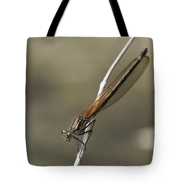 Tote Bag featuring the photograph Red Bluet by Betty Depee