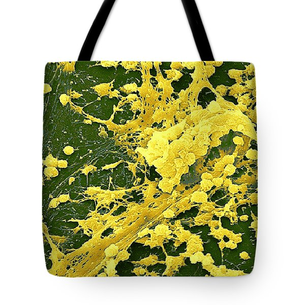 Staphylococcus Biofilm Tote Bag by Science Source