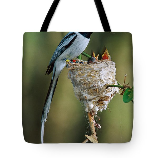 Madagascar Paradise Flycatcher Tote Bag by Cyril Ruoso