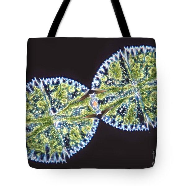 Micrasterias Denticulata Tote Bag by M. I. Walker