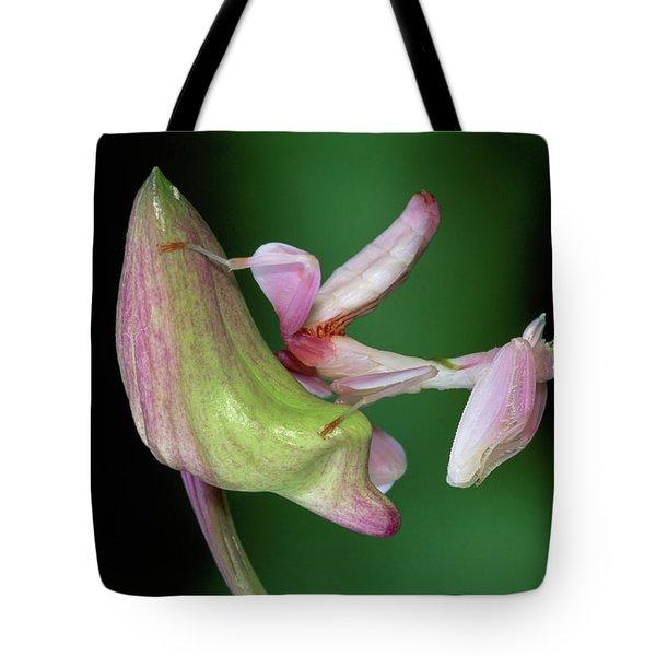 Orchid Mantis Hymenopus Coronatus Tote Bag by Thomas Marent