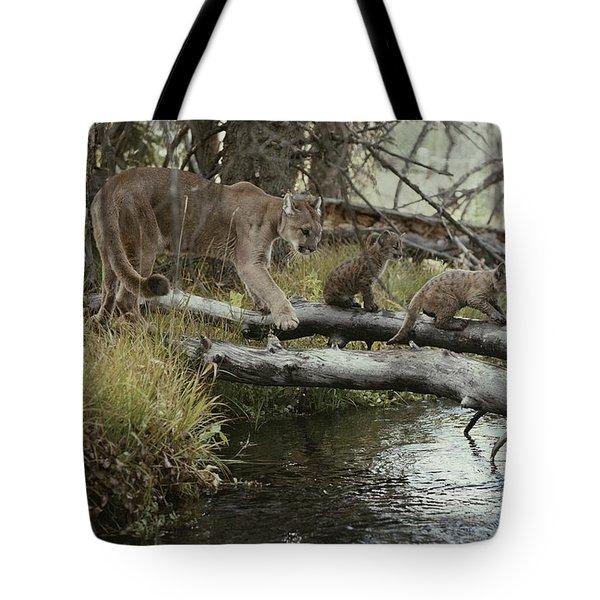 A Mountain Lion, Felis Concolor Tote Bag by Jim And Jamie Dutcher