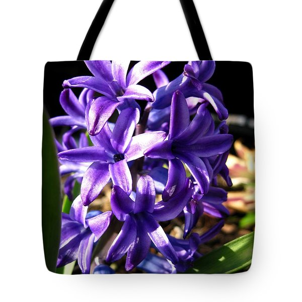 Tote Bag featuring the photograph Hyacinth Named Peter Stuyvesant by J McCombie