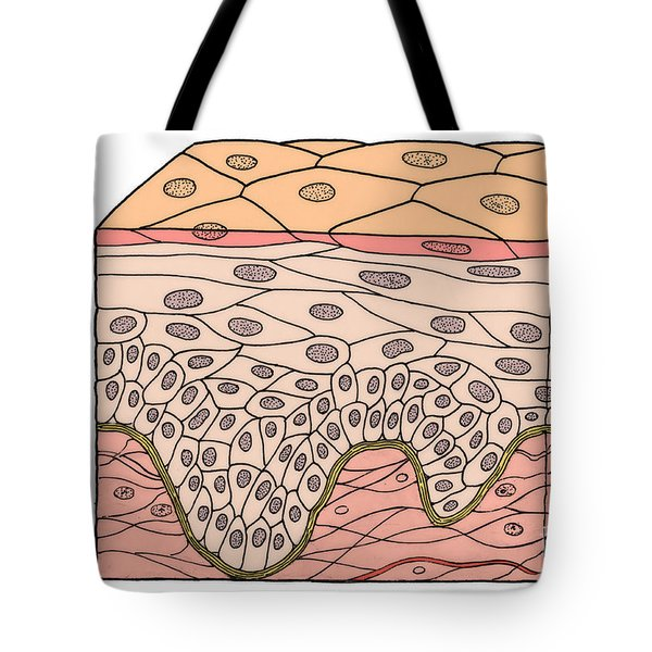 Illustration Of Stratified Squamous Tote Bag by Science Source