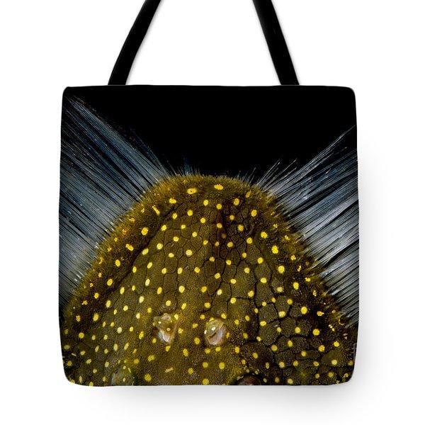 Amazon River Catfish Tote Bag by Dante Fenolio