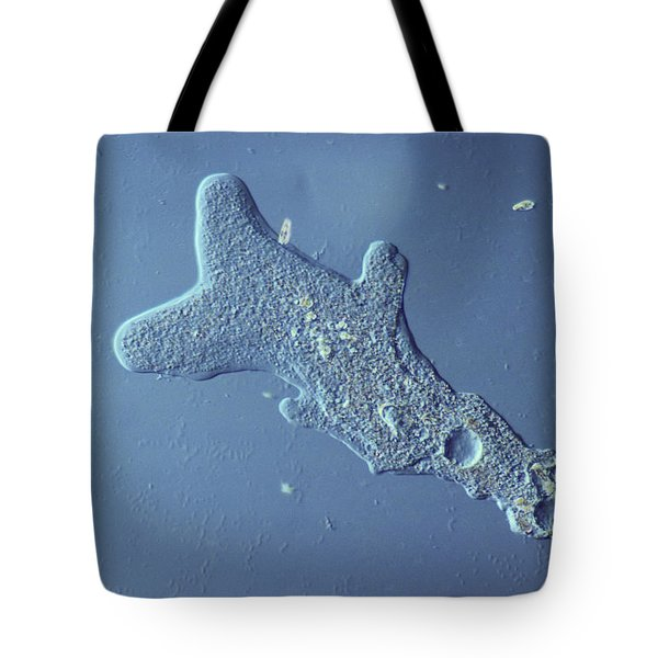 Amoeba Proteus Lm Tote Bag by M. I. Walker