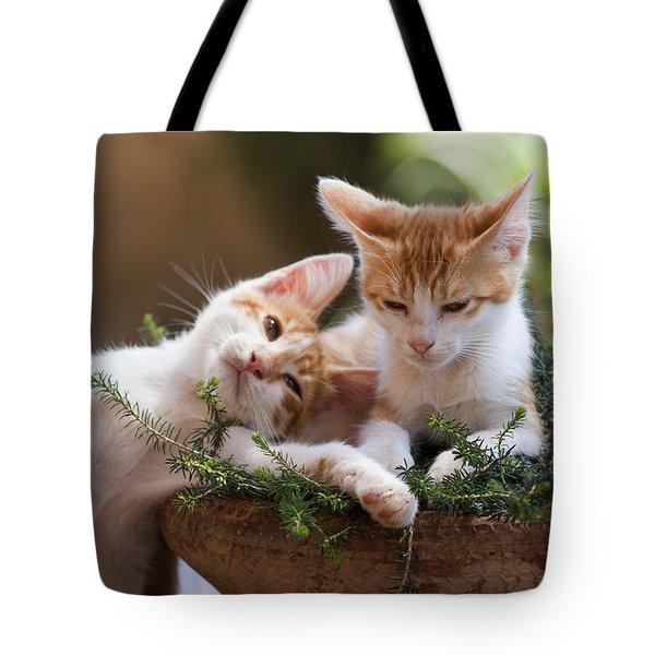 Sweet Cats Tote Bag
