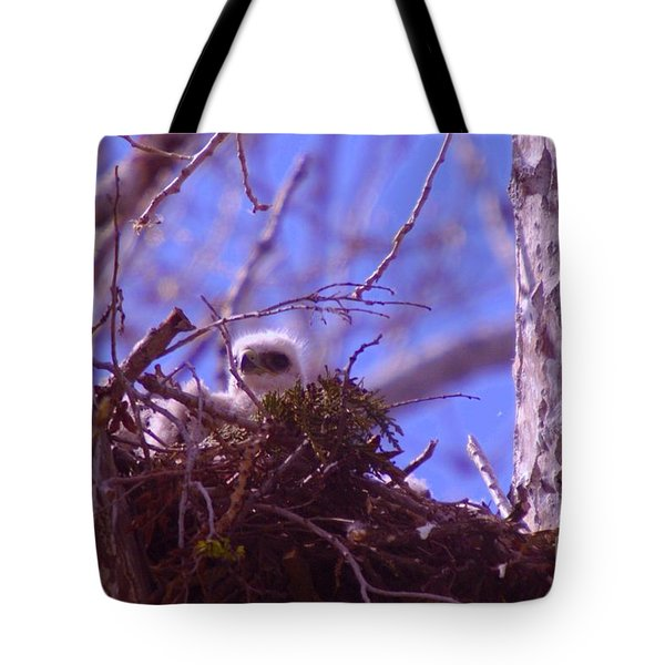 A Baby Red Tail Gazing From Its Nest Tote Bag