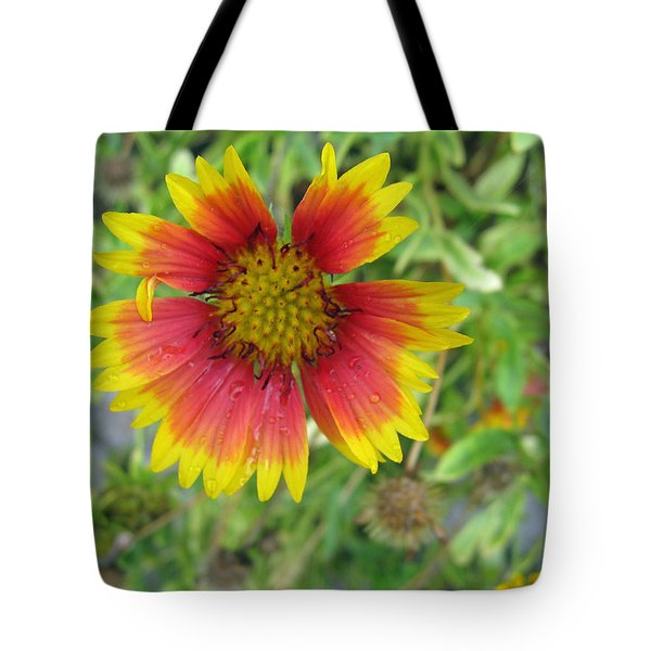 Tote Bag featuring the photograph A Beautiful Blanket Flower by Ashish Agarwal