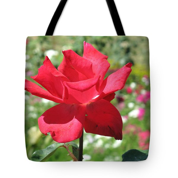 Tote Bag featuring the photograph A Beautiful Red Flower Growing At Home by Ashish Agarwal
