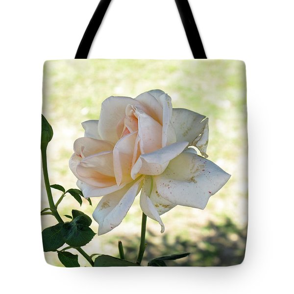 Tote Bag featuring the photograph A Beautiful White And Light Pink Rose Along With A Bud by Ashish Agarwal