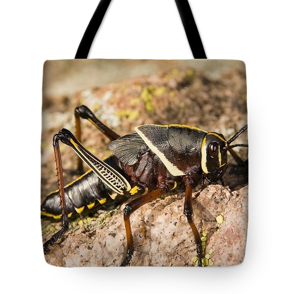 A Colorful Lubber Grasshopper Tote Bag by Jack Goldfarb