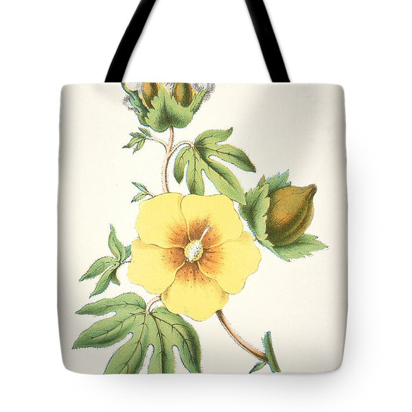 A Cotton Plant Tote Bag by American School