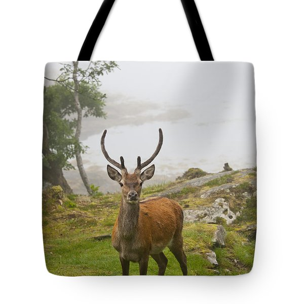 A Deer Stands In A Foggy Meadow By The Tote Bag by John Short