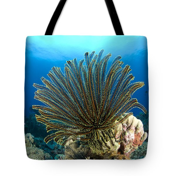 A Feather Star With Arms Extended Tote Bag
