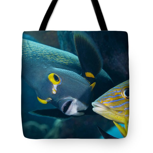 A French Angelfish Swims Up Close Tote Bag by Terry Moore