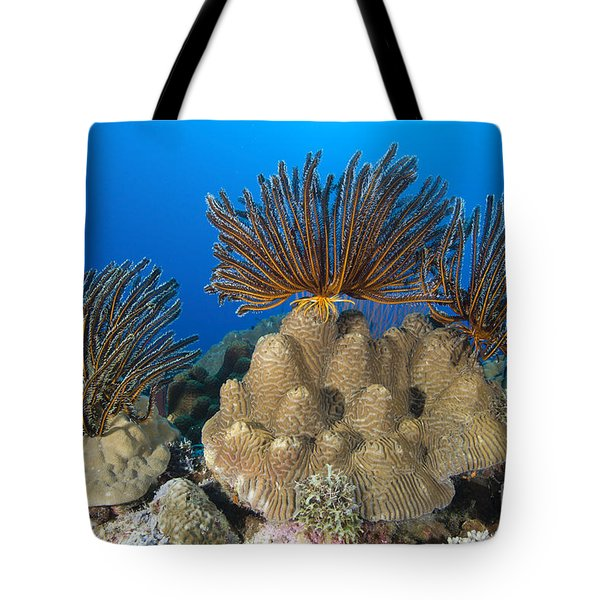 A Gathering Of Crinoid Feather Stars Tote Bag